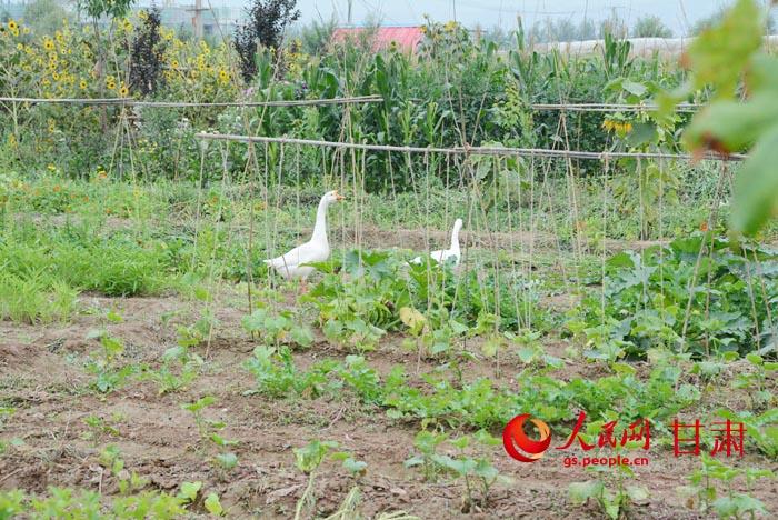 朴门农业模式:返璞归真的新田园生活