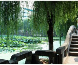 乐至县土特产:天池藕粉