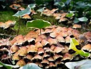 真菌与植物的自由市场经济